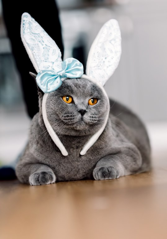gatos nao podem comer chocolate